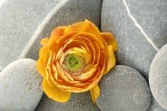 Pedras e flor fotografia de stock royalty free