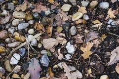 Pedras e folhas Foto de Stock