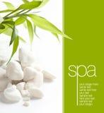 Pedras e folhas brancas Imagens de Stock