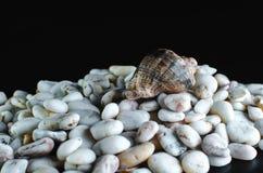 Pedras e fundo pretos do shell do mar Imagens de Stock Royalty Free