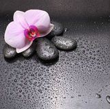 Pedras e orquídea pretas Fotografia de Stock