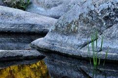 Pedras e plantas bonitas no fundo da garganta de Aktovo do granito Imagens de Stock