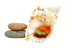 Pedras e seashell fotos de stock