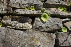 Pedras e verde Imagem de Stock Royalty Free