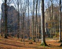 Pedras elevadas na floresta Imagens de Stock Royalty Free