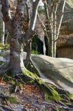 Pedras elevadas na floresta Foto de Stock