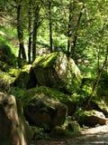 Pedras em uma floresta fotografia de stock royalty free