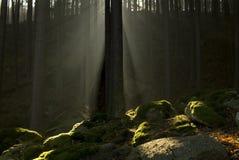 Pedras Moss-grown Imagem de Stock Royalty Free