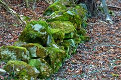 Pedras musgosos entre as folhas para baixo falled foto de stock royalty free
