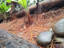 Pedras na área mangunan da floresta do pinho imagem de stock royalty free