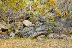 Pedras no bosque na floresta imagens de stock