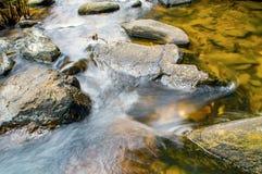 Pedras no rio da montanha na floresta Imagem de Stock Royalty Free