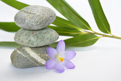 Pedras pretas do zen com açafrão de bambu do en no fundo branco vazio Imagem de Stock Royalty Free