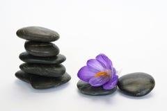 Pedras pretas do zen com açafrão de bambu do en no fundo branco vazio Fotos de Stock Royalty Free