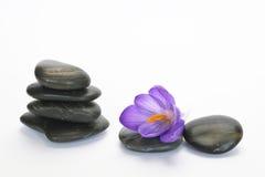 Pedras pretas do zen com açafrão de bambu do en no fundo branco vazio Imagens de Stock Royalty Free