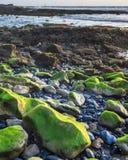 Pedras verdes pelo oceano imagem de stock royalty free