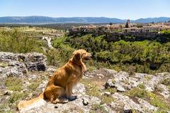 Pedraza, Castilla Y Le?n, Espa?a: golden retriever delante del panorama del pueblo de Pedraza de Mirador el Tungueras imágenes de archivo libres de regalías