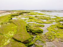 Pedregulhos cobertos com as algas na costa atlântica, Marrocos Fotografia de Stock