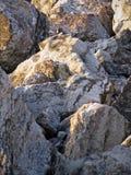 Pedregulhos da pedra calcária Imagem de Stock Royalty Free