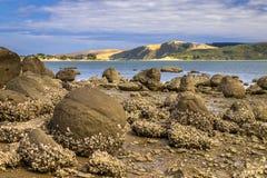 Pedregulhos de Koutu com as dunas de areia de Opononi no contexto, Ne do Northland Imagem de Stock Royalty Free