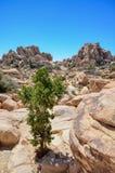 Pedregulhos e uma árvore em Joshua Tree National Park fotos de stock royalty free