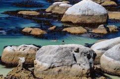 Pedregulhos praia, província de cabo Fotos de Stock