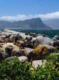 Pedregulhos praia, província de cabo Fotos de Stock Royalty Free