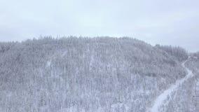 Pedreira coberto de neve nas madeiras video estoque