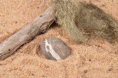 Peeble στην παραλία Στοκ Φωτογραφία
