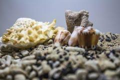 Peebles do anf=d das conchas do mar foto de stock