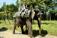 Peeing elephant Royalty Free Stock Photography