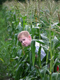 Peek. A little boy peeks around some corn stalks Stock Image