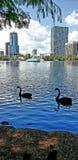 A peek across the Lake Royalty Free Stock Photography