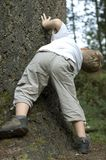 Peek around the tree. Boy peeking from behind a tree playing hide and seek royalty free stock image