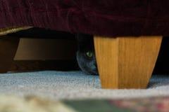 Peek-a-boo Stock Photography