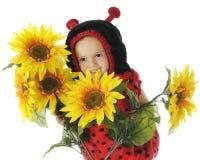 Peek-a-Boo Ladybug Royalty Free Stock Photos