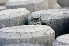 Peek-a-boo stray cat in concrete blocks Royalty Free Stock Images