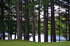 Peek of lake through the pines Stock Photo