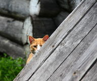 Peekaboo cat Stock Images