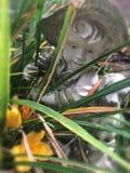 Peekaboo chłopiec Zdjęcie Royalty Free