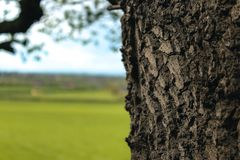 Peekabooboom die op het landschap kijken stock afbeeldingen