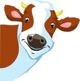 Peeking коровы - иллюстрация вектора Стоковое Изображение