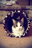 Peeking кота Стоковые Изображения RF