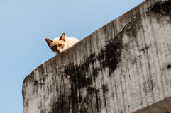 Peeking кота Стоковые Фото