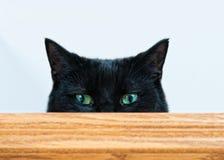 Peeking черный кот Стоковые Изображения