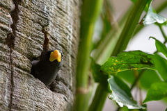 Peeking bird Royalty Free Stock Image