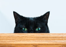 Peeking black cat. Mischievous black cat peeking at the camera shot with a shallow depth of field Stock Images