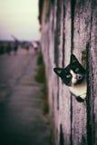 Peeking Cat. Cute black and white cat peeking in a hole of a wall Royalty Free Stock Photo