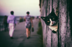 Peeking Cat. Cute black and white cat peeking in a hole of a wall Stock Photo