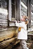 Peeking Child. Curious child peeking into an abandoned log cabin Royalty Free Stock Photo